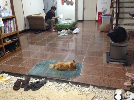 ゲストハウス風家犬も子どもも泊まれるゲストハウスは珍しい