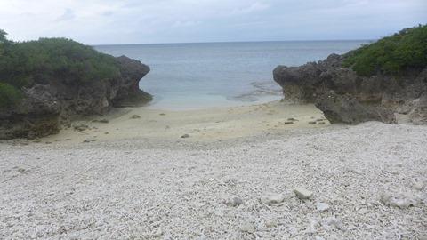 毛崎海岸の浜シタン群落