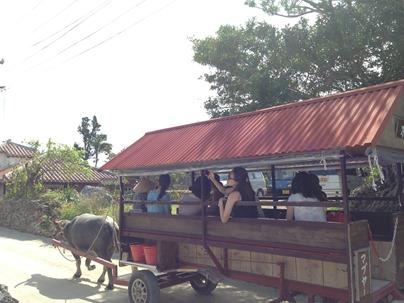 竹富島の水牛車 新田観光