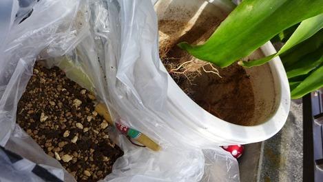 観葉植物 用土の配合
